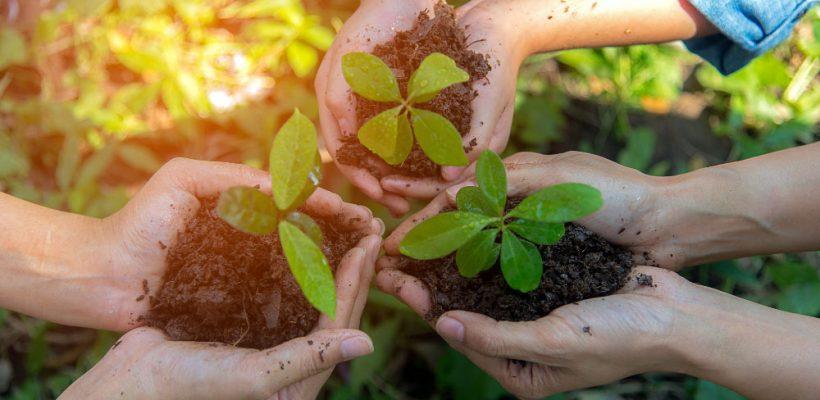 La Red por el Desarrollo Sostenible: moviéndose por el medio ambiente